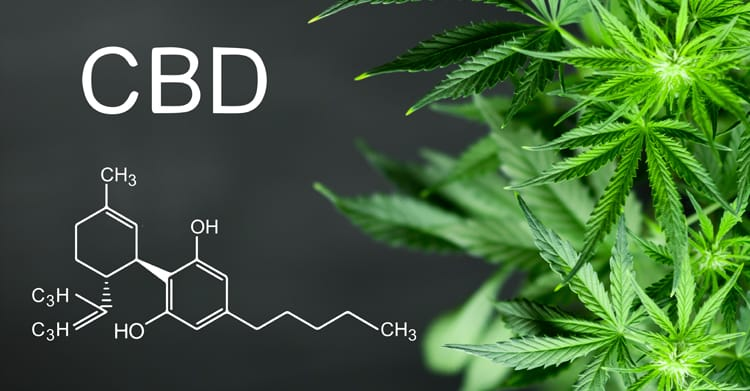 The Honest To Benefits Fact On CBD Shop